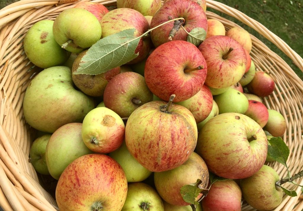 Waste Not: Autumn apple harvest