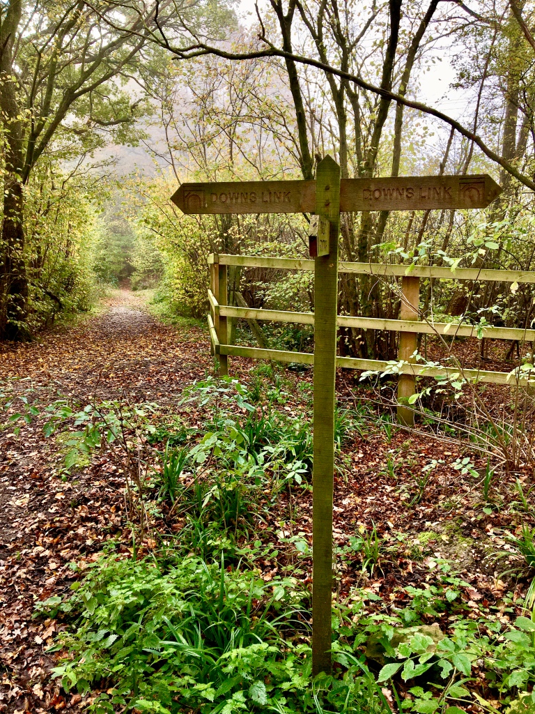 Which Way?  Follow your nose... the Southwater & Madgelande Wood 9m circular walk.